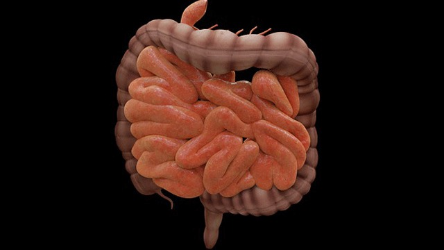 Certain Gut Bacteria May Contribute to Bowel Cancer - The Mandatory Training Group UK -
